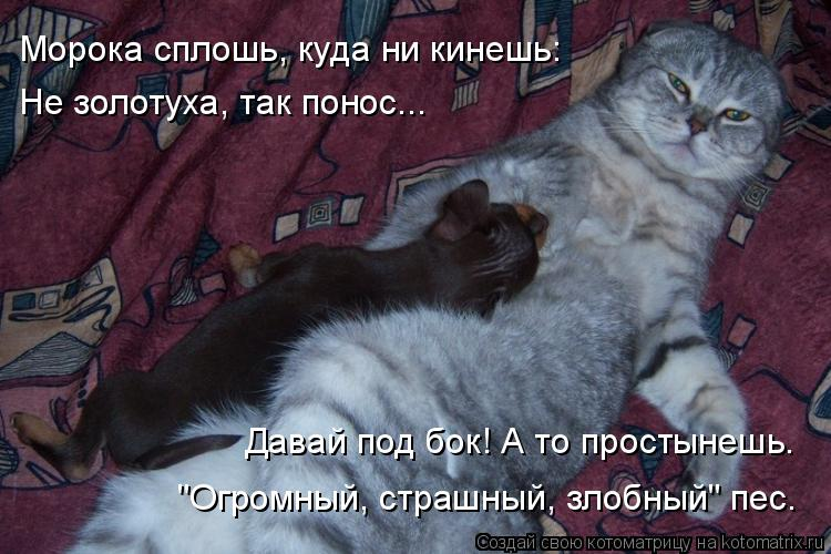 """Котоматрица: Морока сплошь, куда ни кинешь: Не золотуха, так понос... Давай под бок! А то простынешь. """"Огромный, страшный, злобный"""" пес."""