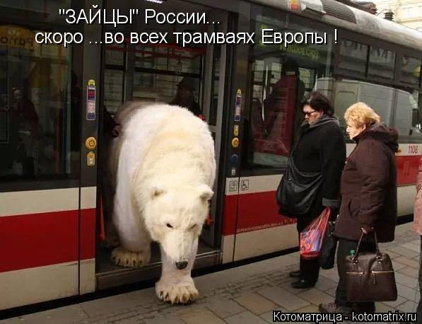 """Котоматрица: """"ЗАЙЦЫ"""" России... скоро ...во всех трамваях Европы !"""