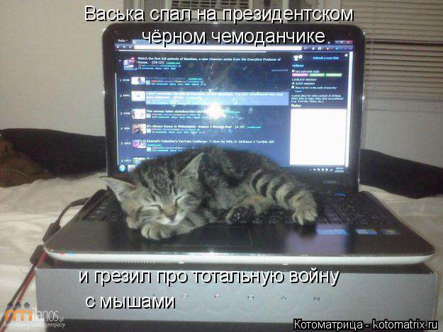 Котоматрица: Васька спал на президентском чёрном чемоданчике и грезил про тотальную войну с мышами