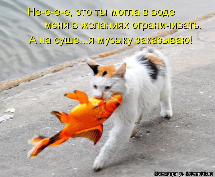 Котоматрица: Не-е-е-е, это ты могла в воде  меня в желаниях ограничивать. А на суше...я музыку заказываю!