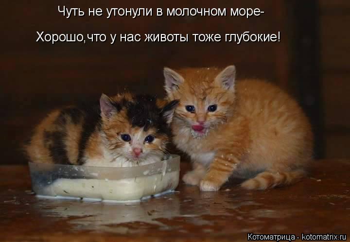 Котоматрица: Чуть не утонули в молочном море- Хорошо,что у нас животы тоже глубокие!