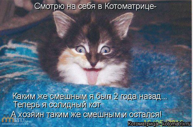Котоматрица: Смотрю на себя в Котоматрице- Каким же смешным я был 2 года назад... Теперь я солидный кот А хозяин таким же смешным и остался!
