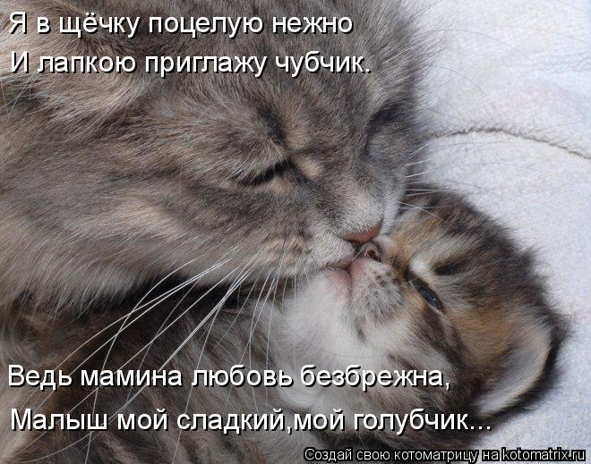Котоматрица: И лапкою приглажу чубчик. Я в щёчку поцелую нежно Ведь мамина любовь безбрежна, Малыш мой сладкий,мой голубчик...