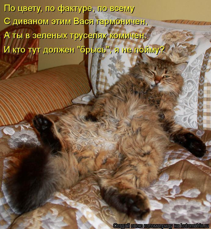 """Котоматрица: По цвету, по фактуре, по всему  С диваном этим Вася гармоничен,  А ты в зеленых труселях комичен.  И кто тут должен """"брысь"""", я не пойму?"""