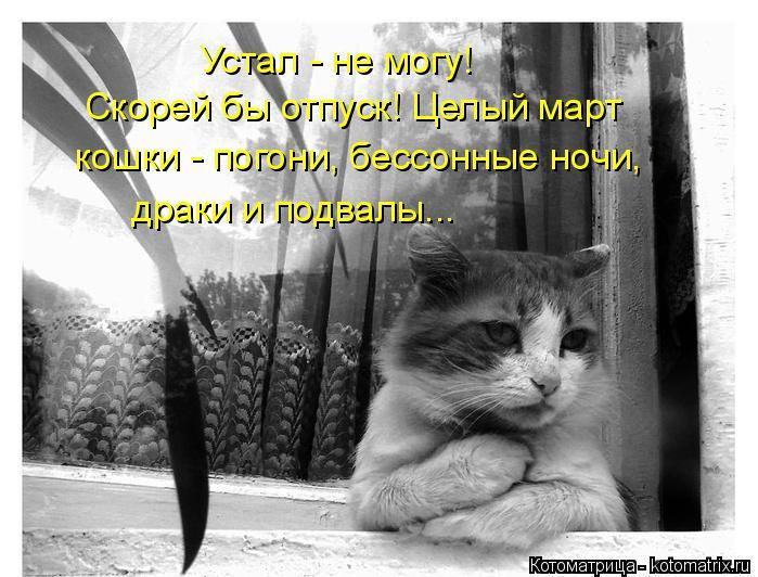 Котоматрица: Устал - не могу! Скорей бы отпуск! Целый март кошки - погони, бессонные ночи, драки и подвалы...