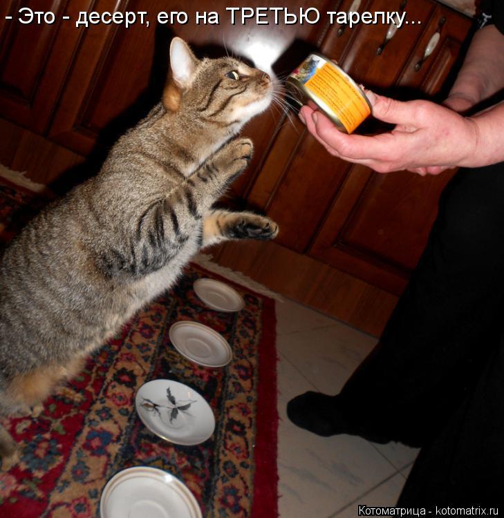 Котоматрица: - Это - десерт, его на ТРЕТЬЮ тарелку...
