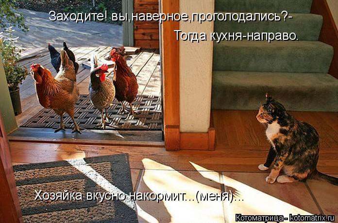 Котоматрица: Заходите! вы,наверное,проголодались?- Тогда кухня-направо. Хозяйка вкусно накормит...(меня)...