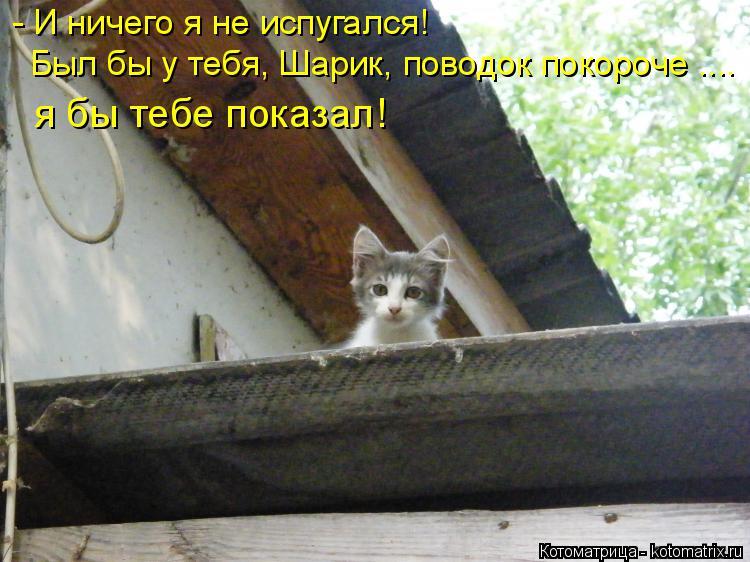 Котоматрица: - И ничего я не испугался! Был бы у тебя, Шарик, поводок покороче .... я бы тебе показал!
