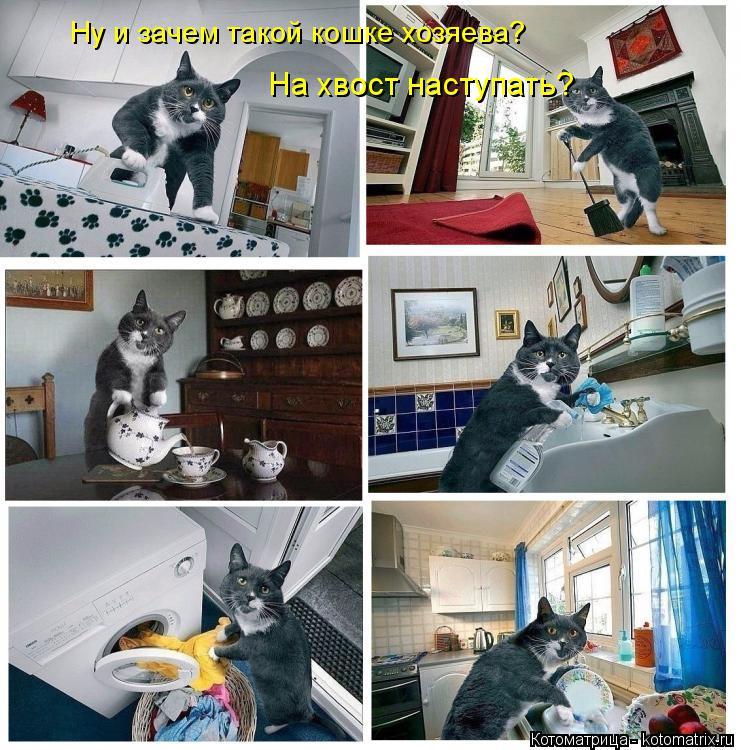 Котоматрица: Ну и зачем такой кошке хозяева? На хвост наступать?