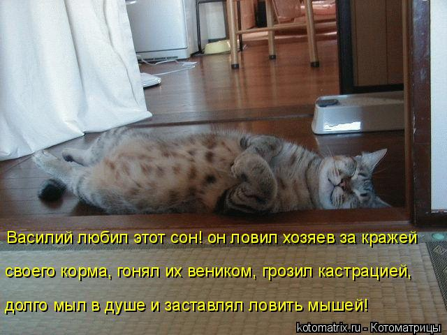 Котоматрица: Василий любил этот сон! он ловил хозяев за кражей своего корма, гонял их веником, грозил кастрацией, долго мыл в душе и заставлял ловить мыше