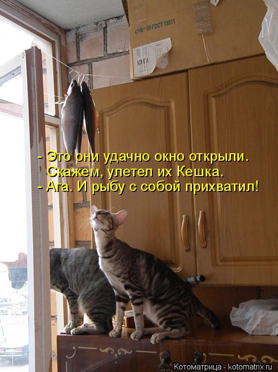 Котоматрица: - Ага. И рыбу с собой прихватил!  Скажем, улетел их Кешка. - Это они удачно окно открыли.
