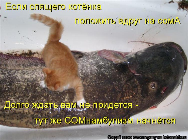 Котоматрица: Если спящего котёнка  положить вдруг на сомА Долго ждать вам не придется - тут же СОМнамбулизм начнётся