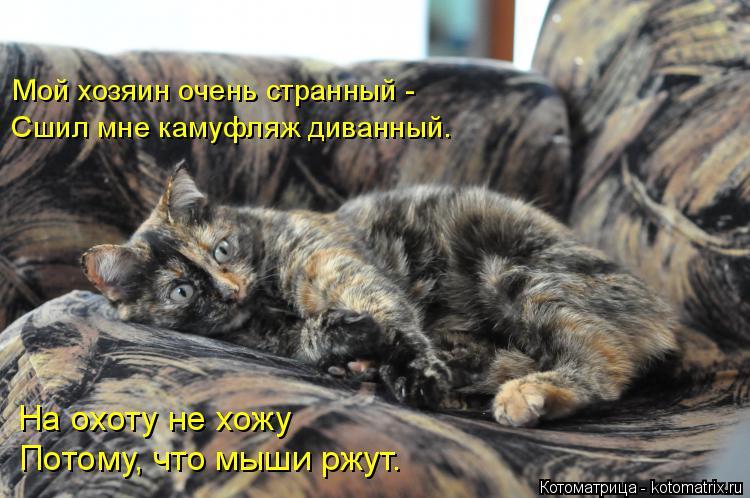 Котоматрица: Мой хозяин очень странный - Сшил мне камуфляж диванный. На охоту не хожу Потому, что мыши ржут.