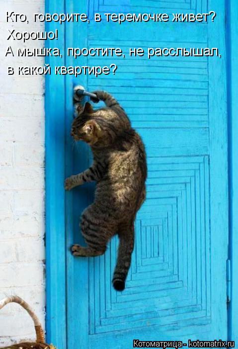 Котоматрица: Кто, говорите, в теремочке живет? Хорошо!  А мышка, простите, не расслышал, в какой квартире?