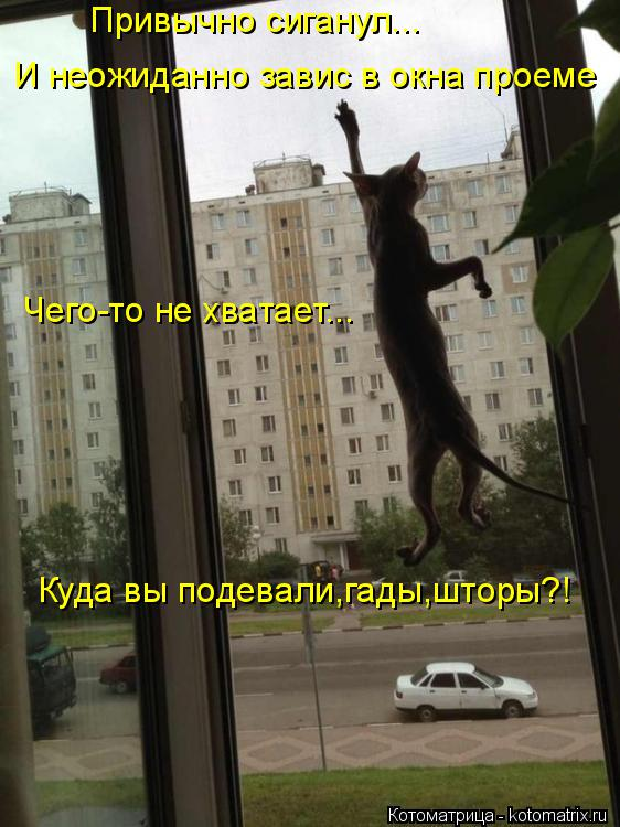 Котоматрица: Привычно сиганул... И неожиданно завис в окна проеме Чего-то не хватает... Куда вы подевали,гады,шторы?!