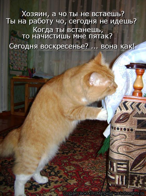 Котоматрица: Хозяин, а чо ты не встаешь? Ты на работу чо, сегодня не идешь? Когда ты встанешь,  то начистишь мне пятак? Сегодня воскресенье? ... вона как!