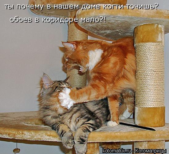 Котоматрица: ты почему в нашем доме когти точишь?  обоев в коридоре мало?!