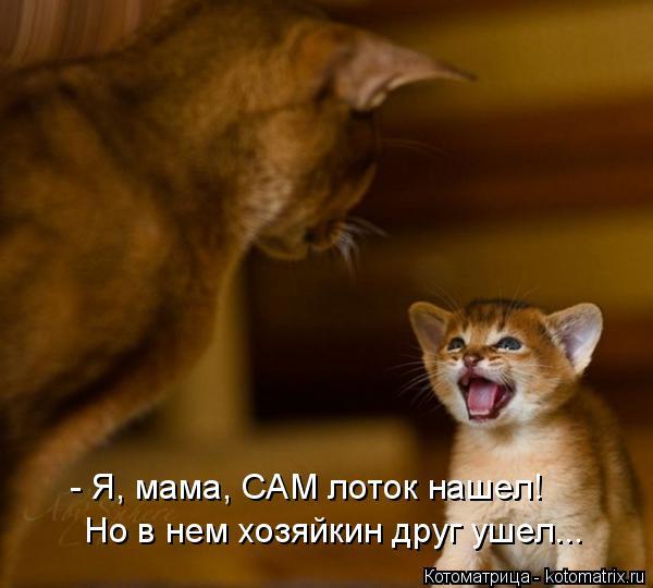 Котоматрица: - Я, мама, САМ лоток нашел! Но в нем хозяйкин друг ушел...
