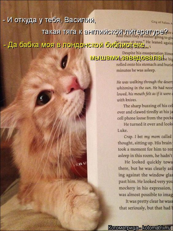 Котоматрица: такая тяга к английской литературе? - Да бабка моя в лондонской библиотеке... мышами заведовала! - И откуда у тебя, Василий,