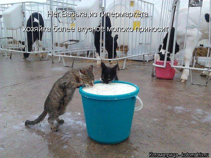 Котоматрица: Нет,Васька,из гипермаркета хозяйка более вкусное молоко приносит