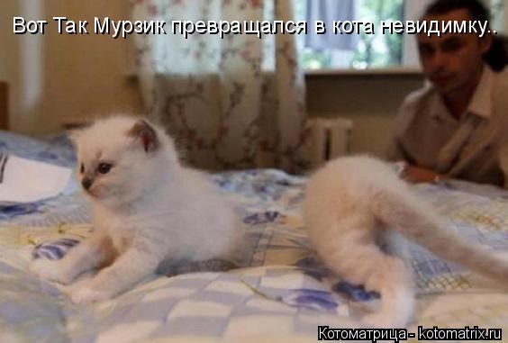 Котоматрица: Вот Так Мурзик превращался в кота невидимку..