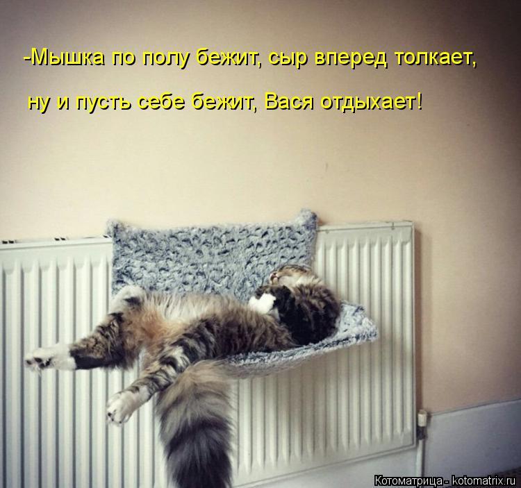 Котоматрица: -Мышка по полу бежит, сыр вперед толкает, ну и пусть себе бежит, Вася отдыхает!