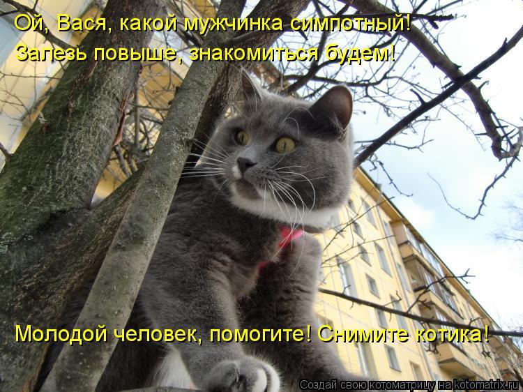 Котоматрица: Ой, Вася, какой мужчинка симпотный! Залезь повыше, знакомиться будем! Молодой человек, помогите! Снимите котика!