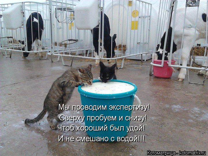 Котоматрица: Мы проводим экспертизу! Сверху пробуем и снизу! Чтоб хороший был удой! И не смешано с водой!!!