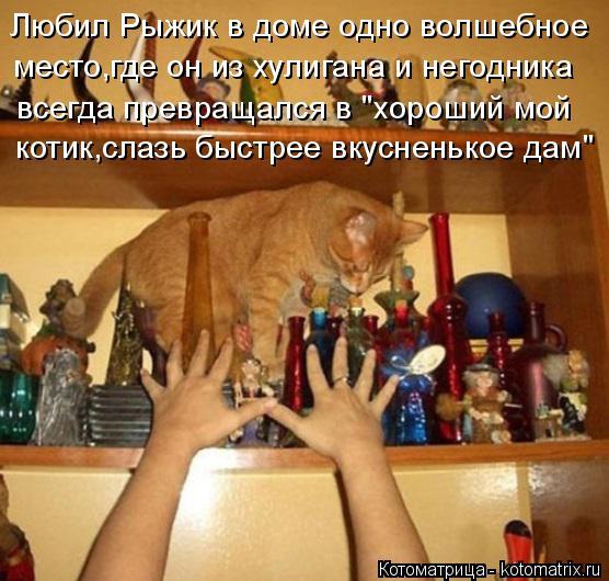 """Котоматрица: Любил Рыжик в доме одно волшебное место,где он из хулигана и негодника  всегда превращался в """"хороший мой  котик,слазь быстрее вкусненькое д"""