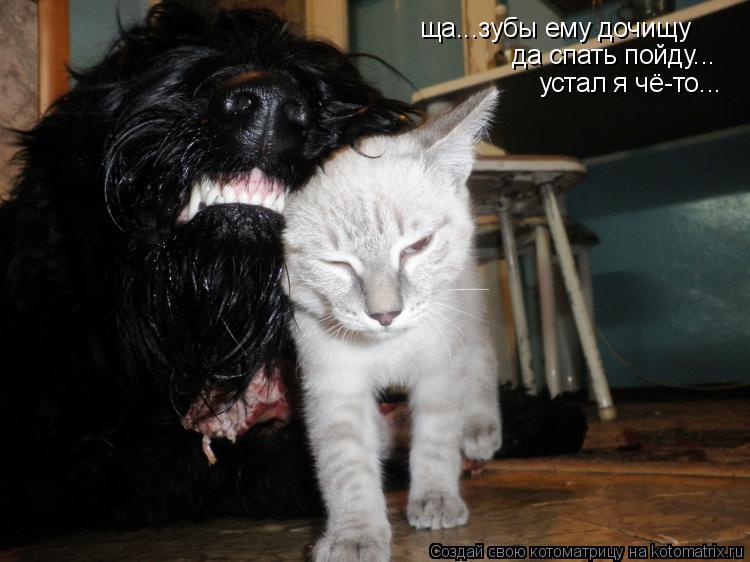 Котоматрица: ща...зубы ему дочищу  да спать пойду... устал я чё-то...