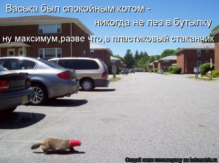 Котоматрица: Васька был спокойным котом - никогда не лез в бутылку ну максимум,разве что,в пластиковый стаканчик