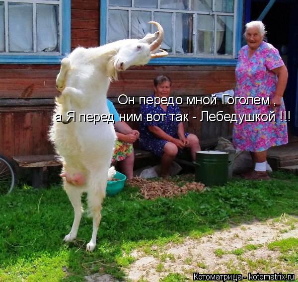 Котоматрица: Он передо мной Гоголем , а Я перед ним вот так - Лебедушкой !!!
