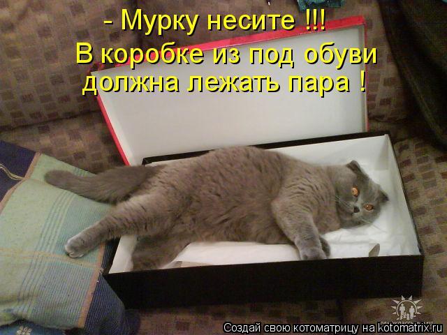Котоматрица: - Мурку несите !!! В коробке из под обуви  должна лежать пара !