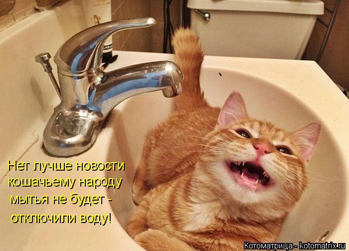 Котоматрица: Нет лучше новости  кошачьему народу мытья не будет - отключили воду!