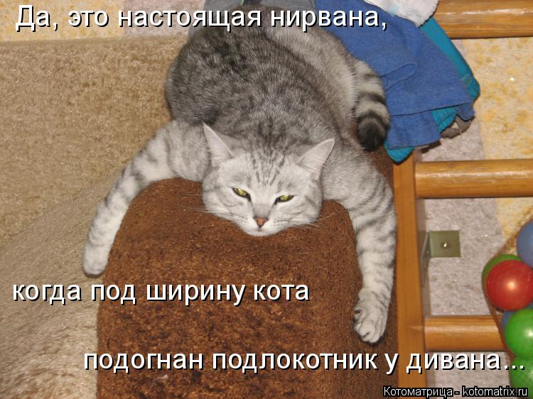 Котоматрица: Да, это настоящая нирвана, когда под ширину кота подогнан подлокотник у дивана...