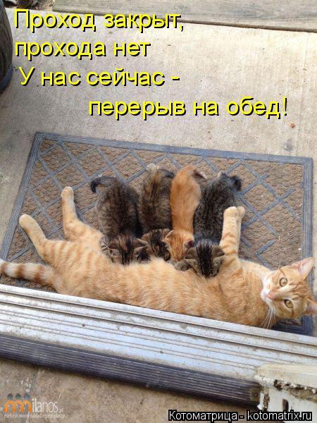 Котоматрица: Проход закрыт, прохода нет У нас сейчас - перерыв на обед!