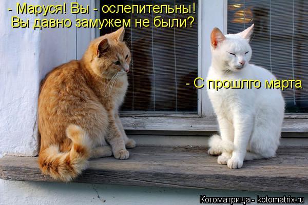 Котоматрица: - Маруся! Вы - ослепительны! Вы давно замужем не были? - С прошлго марта