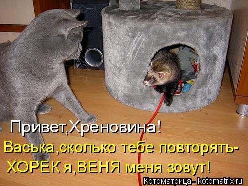 Котоматрица: Привет,Хреновина! Васька,сколько тебе повторять- ХОРЕК я,ВЕНЯ меня зовут!