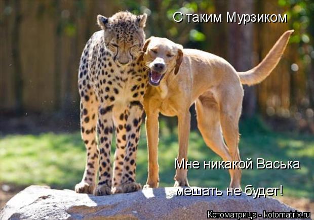 Котоматрица: С таким Мурзиком Мне никакой Васька мешать не будет!