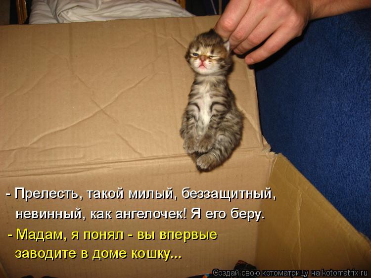 Котоматрица: - Прелесть, такой милый, беззащитный, невинный, как ангелочек! Я его беру. - Мадам, я понял - вы впервые заводите в доме кошку...