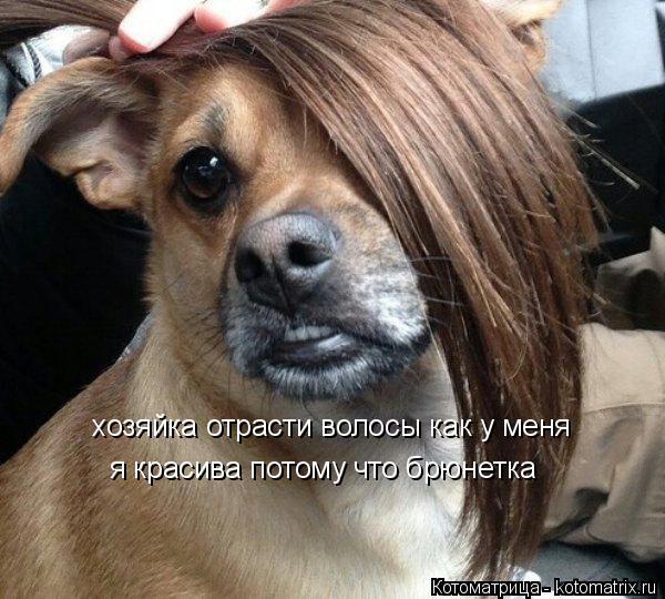 Котоматрица: хозяйка отрасти волосы как у меня  я красива потому что брюнетка