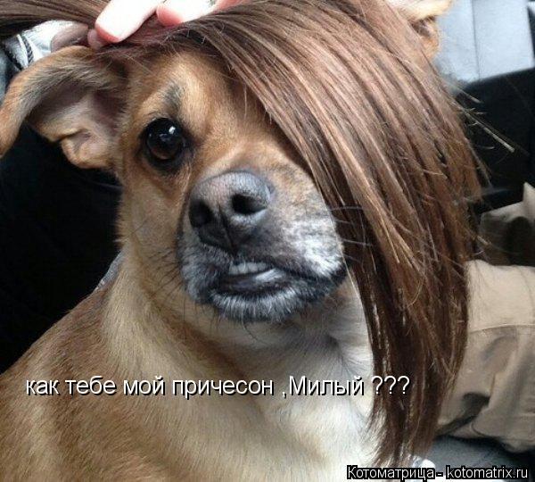 Котоматрица: как тебе мой причесон ,Милый ???