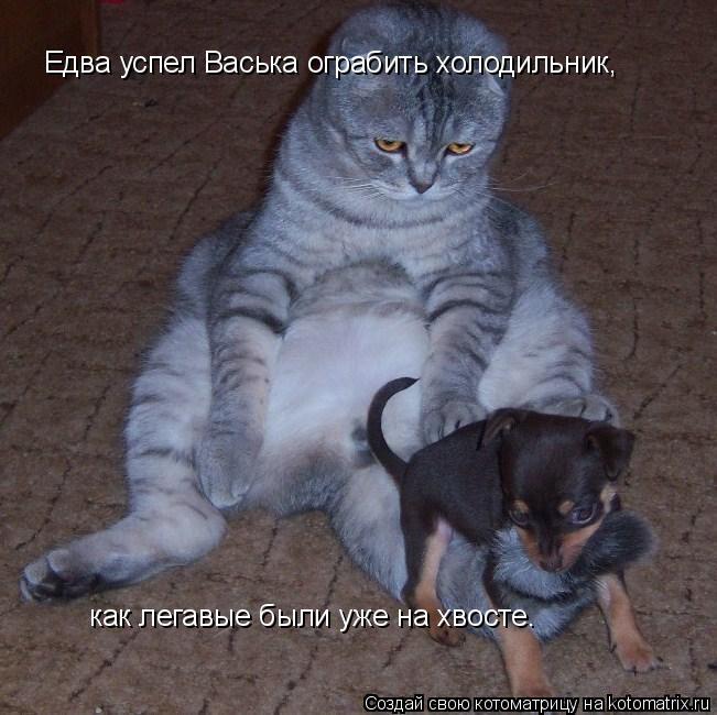 Котоматрица: Едва успел Васька ограбить холодильник, как легавые были уже на хвосте.