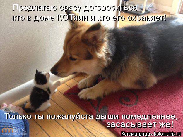 Котоматрица: Предлагаю сразу договориться кто в доме КОТяин и кто его охраняет! Только ты пожалуйста дыши помедленнее, засасывает же!
