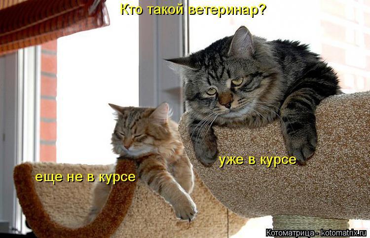 Котоматрица: Кто такой ветеринар? еще не в курсе уже в курсе