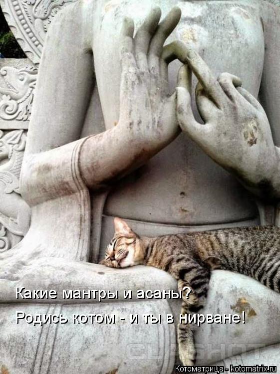 Котоматрица: Какие мантры и асаны? Родись котом - и ты в нирване!