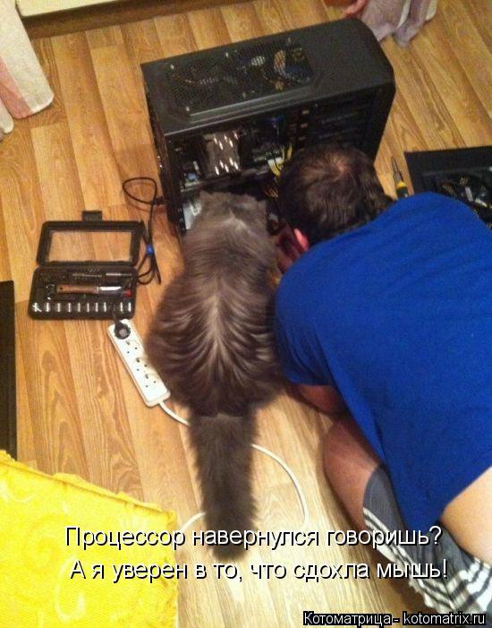 Котоматрица: А я уверен в то, что сдохла мышь! Процессор навернулся говоришь?