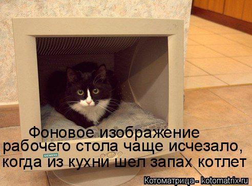 Котоматрица: Фоновое изображение  рабочего стола чаще исчезало, когда из кухни шел запах котлет