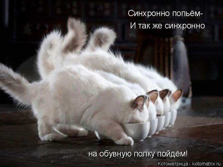 Котоматрица: Синхронно попьём- И так же синхронно на обувную полку пойдём!