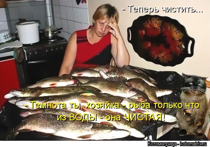 Котоматрица: - Темнота ты, хозяйка - рыба только что из ВОДЫ - она ЧИСТАЯ! - Теперь чистить...